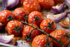 Oven roasted tomatoes and onions Royalty Free Stock Photos