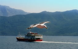 Seagull Flying Over the Aegean Sea. Summer seascape Royalty Free Stock Images