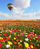 Over the blossoming flowers of flying a balloon Royalty Free Stock Image
