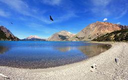 Over the blue lake the predatory condor turns Royalty Free Stock Images