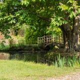 Over The Bridge. Looking ar the Japanese Bridge next to the tree at Exbury Gardens royalty free stock photography