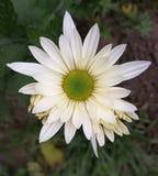 Over een bloem Stock Foto's