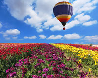 Over the field  big balloon Stock Image