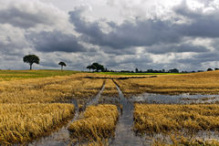 Over flooded corn field. On the island of Moen Stock Photo