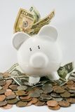 Over-Flowing Saver!. This little piggy is seeing dollar signs and over-flowing with American currency Royalty Free Stock Images