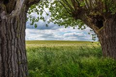 Over a grain field are dramatic clouds, in the foreground is green grass and left and right are old willows stock image