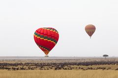 Over the great herds of Africa. Flight in a hot air balloon. Kenya, Africa stock image