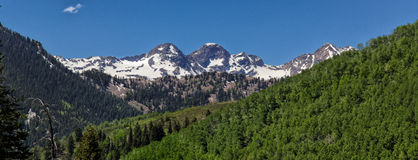 Over Green Aspens. Panorama view of the back of Twin peaks and Storm mountain with green aspens in the foreground snow still meting on the peaks part of the Stock Photo
