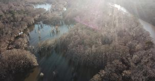 Over the lake. A drone flying above the tree tops of a lake stock video