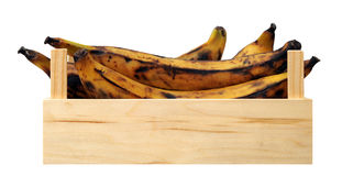 Over ripe banana plantain Stock Photography