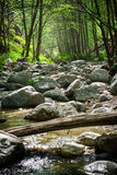Over the River. Flowing river running through the forest Stock Image