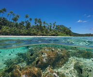 Over under lagoon island sea anemone fish Pacific Royalty Free Stock Photo