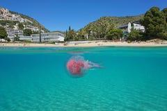 Free Over Under Sea Beach Jellyfish Underwater Spain Stock Image - 108661321