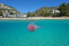 Over under sea beach jellyfish underwater Spain. Over and under sea surface near a Mediterranean beach with a jellyfish underwater, Spain, Costa Brava, playa Stock Image