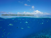Over under sea surface island and tropical fishes. Over and under sea surface, an island at the horizon with tropical fishes damselfish and unicornfish Stock Images