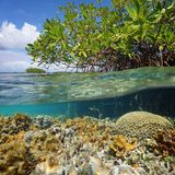 Over and under sea surface near islet of mangrove Royalty Free Stock Images