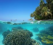 Over under sea tropical shore and coral underwater royalty free stock image