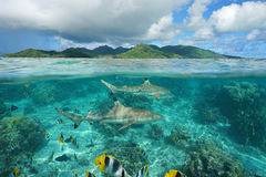 Free Over Under Sharks Fish Underwater Pacific Island Royalty Free Stock Photography - 89047597