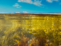 Over-under split shot of clear water in tidal pool Royalty Free Stock Images