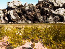 Over-under split shot of clear water in tidal pool. Half underwater half over, over-under split shot of seaweed growth in tidal pool with dark exposed tidal Stock Images