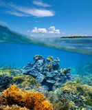 Over-under split view coral reef underwater Royalty Free Stock Images