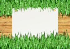 Over view of grass on white background Royalty Free Stock Photography