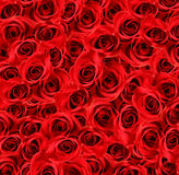 Over view of large red roses Stock Photography