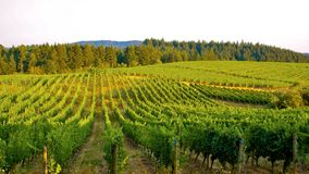 Over the Vineyard Royalty Free Stock Photography
