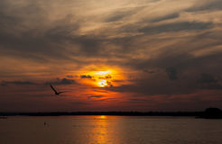Over the Volga. Seagull flying over the Volga in the fiery sunset Royalty Free Stock Photos