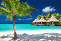 Over water bungalows on a tropical island with palm trees and am royalty free stock images