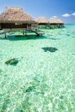 Over waterbungalow met stappen in groene lagune royalty-vrije stock afbeelding