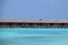 Over--waterbungalowwen (de Maldiven) royalty-vrije stock foto
