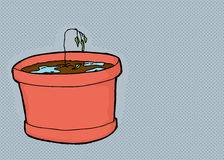Over-Watered Seedling on Gray Stock Images