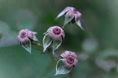 Overblown bloemen Royalty-vrije Stock Afbeelding