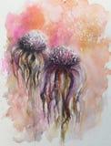 Overblown bloemen van Echinacea Royalty-vrije Stock Afbeelding