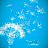 Overblown dandelion  background Stock Photo