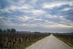 Sauternes Vineyard. Overcast day in a vineyard in Sauternes royalty free stock image