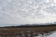 Overcast grassland. Grasslands and woodlands in overcast winter sky stock photography