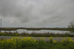 Overcast Marsh Royalty Free Stock Photography