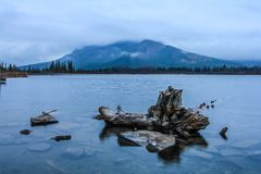 Overcast morning on Vermillion Lakes. With logs in the water. Banff National Park, Alberta, Canada Stock Images