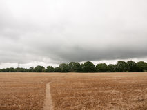 Overcast uk crop field harvested with walk path through Stock Image