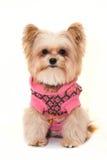 Overcoat Dog Royalty Free Stock Image