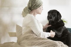 Overcoming pain with pet therapy. Cancer patient overcoming pain with pet assisted therapy treatment Stock Photography