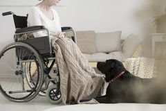 Overcoming tumor with pet therapy. Cancer patient on a wheelchair overcoming tumor with her dog during pet therapy Royalty Free Stock Photography