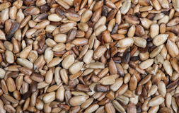 Overcooked peeled sunflower seeds. Background Stock Images