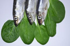 Fish sprat upside down. Overcrowded with fish. Upside down Royalty Free Stock Images