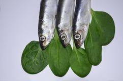 Fish sprat upside down Stock Image