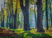 overfiltered artistic morning colorful forest royalty free stock photos
