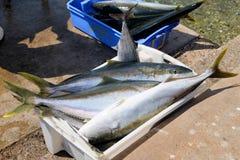 Overfishing Royalty Free Stock Photo