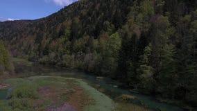 Overflight das cisnes na reserva natural - Biaufond video estoque
